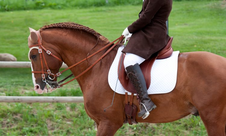 Buy equestrian equipment for your beloved hobby